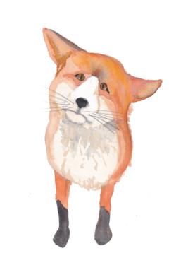 Sad Fox by Priscilla Emmerson