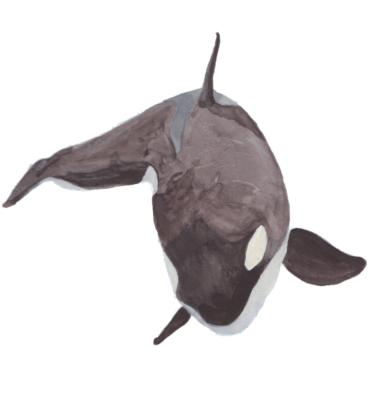 Orca by Priscilla Emmerson